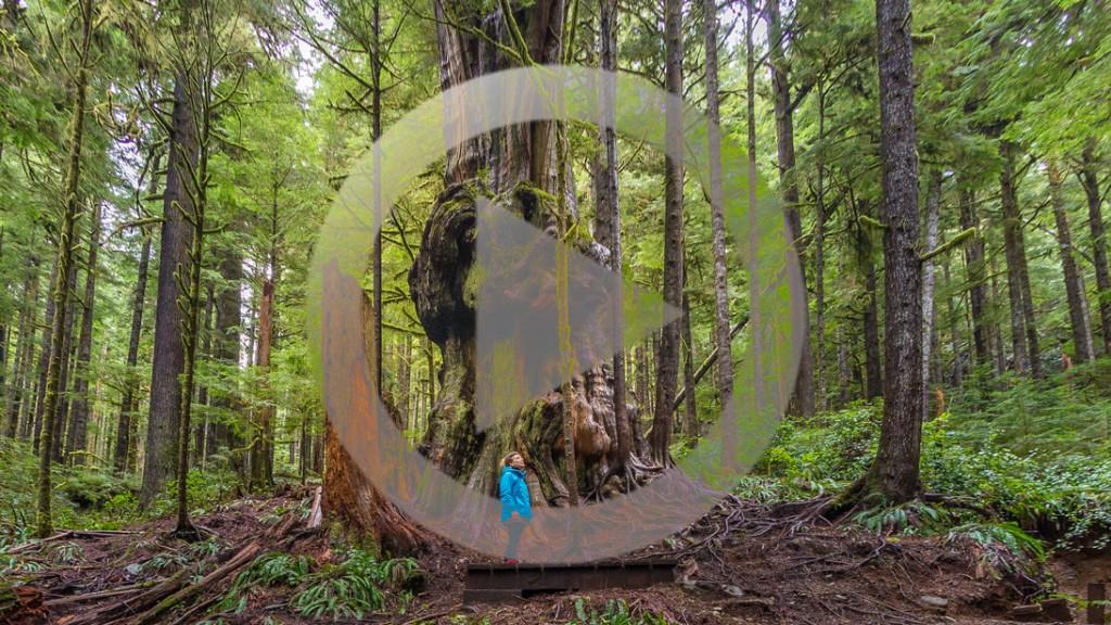 Avatar_Grove_360_Panorama_Play_Button