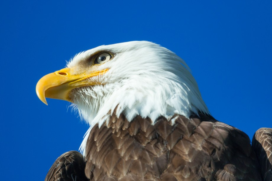 EagleBackyard2